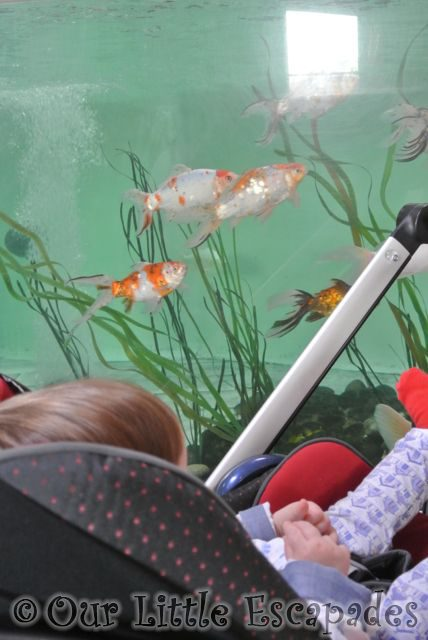 Colchester_Zoo2