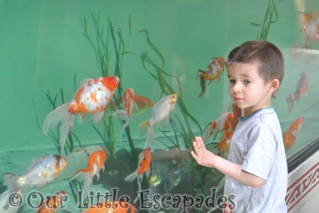 Colchester_Zoo_22