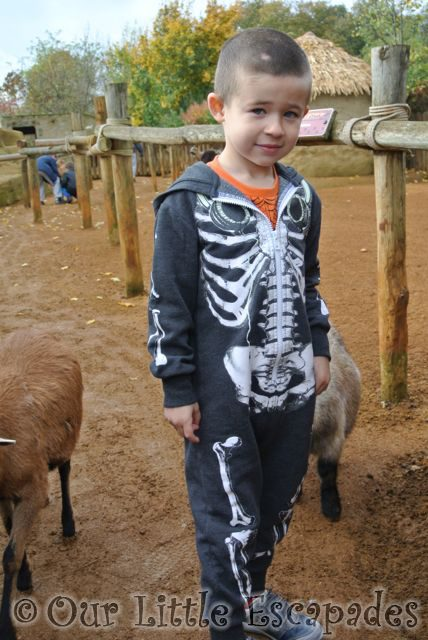 ColchesterZooHalloween2