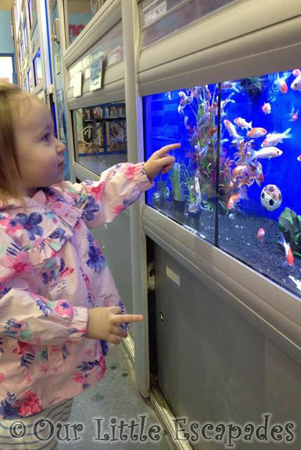 little e pointing fish pet shop