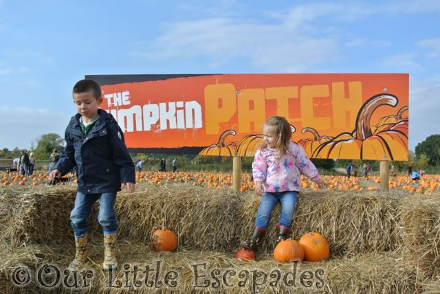 Colchester Pumpkin Patch at Foxes Farm