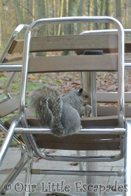 squirrel eating nuts