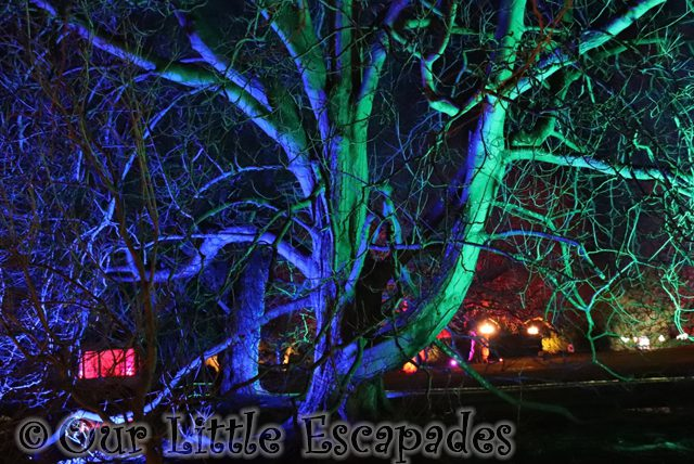 enchanted audley end blue trees