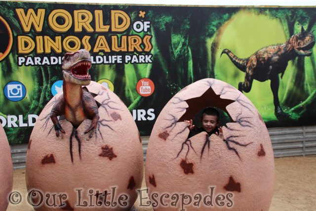 world of dinosaurs paradise wildlife park dinosaur egg photo spot