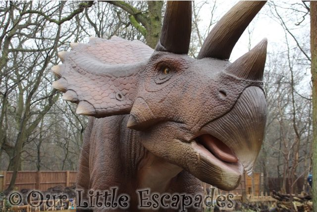 world of dinosaurs triceratops paradise wildlife park