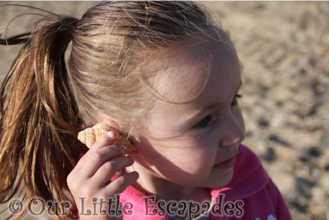 little e seashell listening to the sea