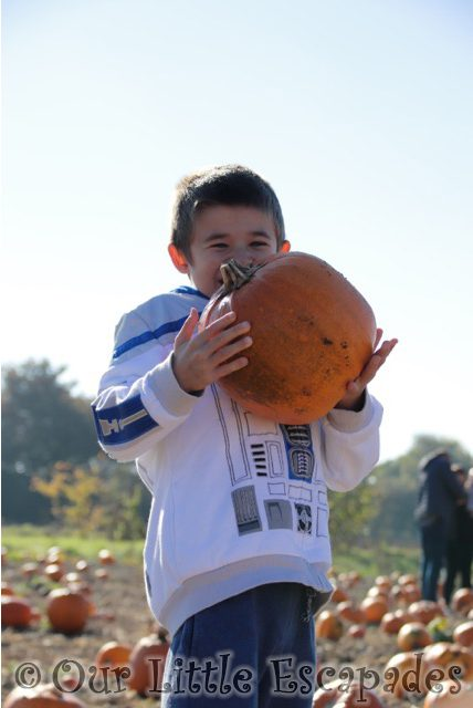 colchester pumpkin patch foxes farm ethan