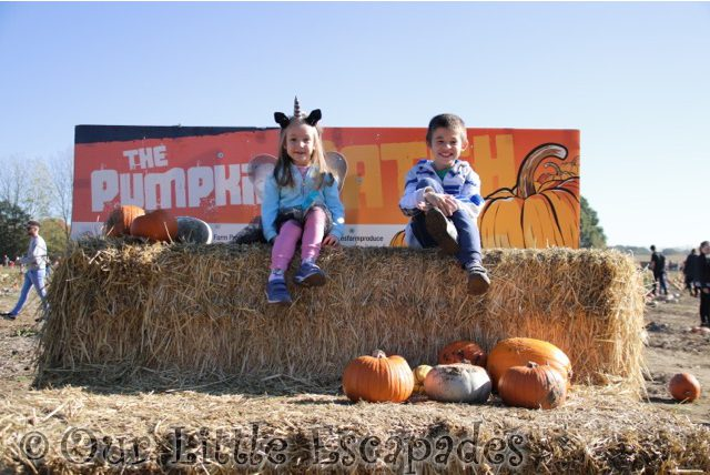 Colchester Pumpkin Patch Foxes Farm 2018