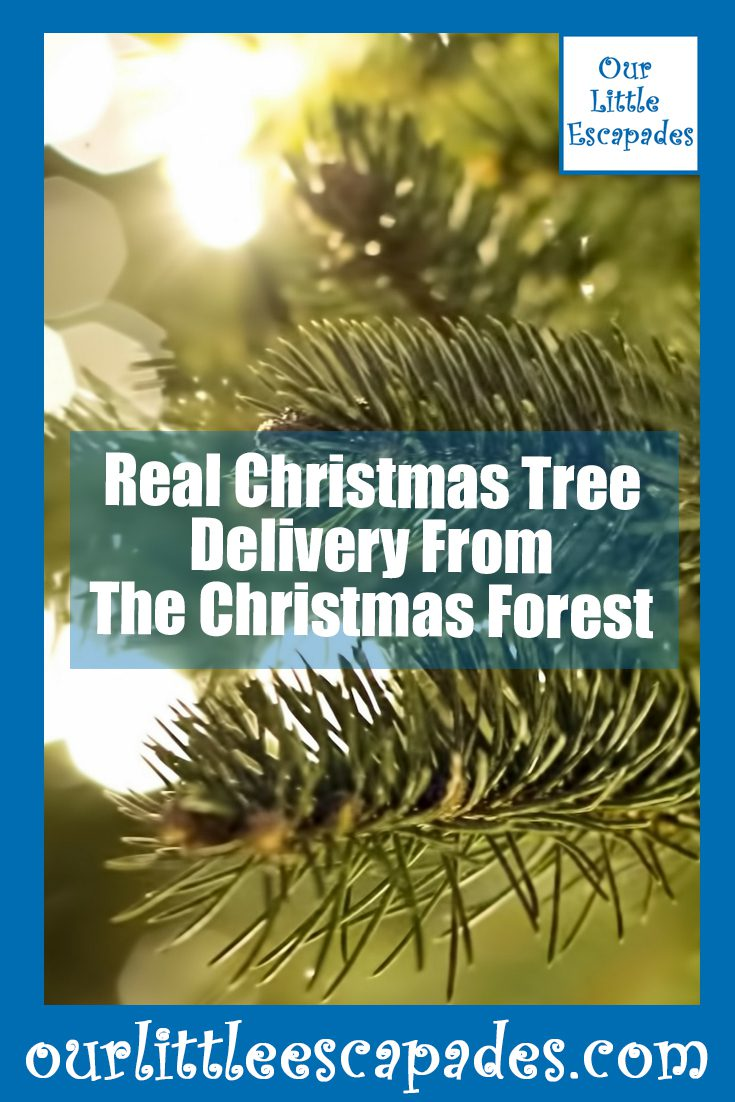 Real Christmas Tree Delivery From The Christmas Forest
