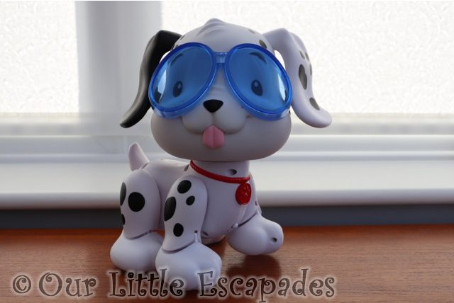 puppy wearing swimming goggles
