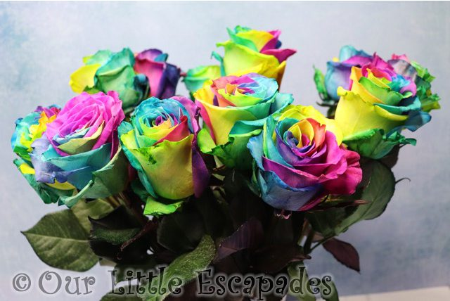 rainbow roses bouquets blossoming gifts valentines day gift ideas