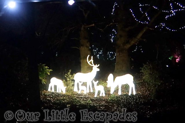 Twilight Christmas Experience at Colchester Zoo