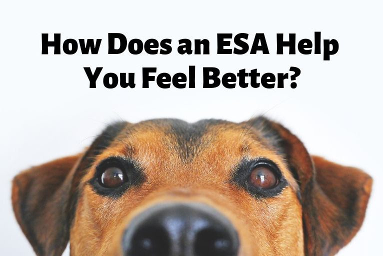 How Does an ESA Help You Feel Better?