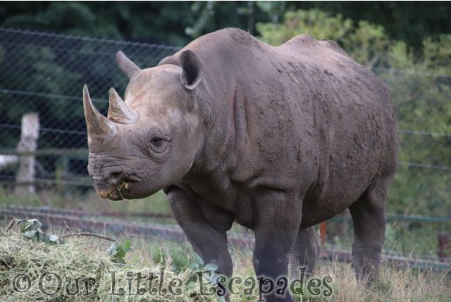 Our Day At Port Lympne Safari Park and Wild Animal Reserve REVIEW