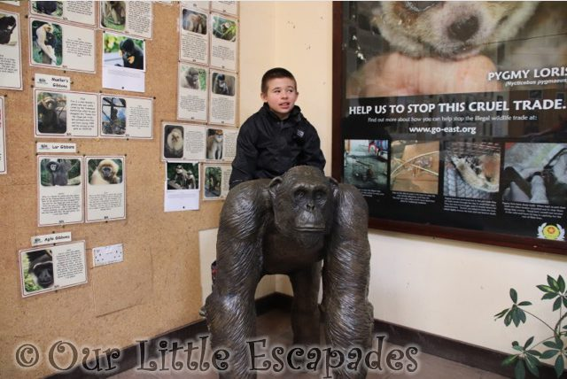 ethan chimpanzee statue monkey world