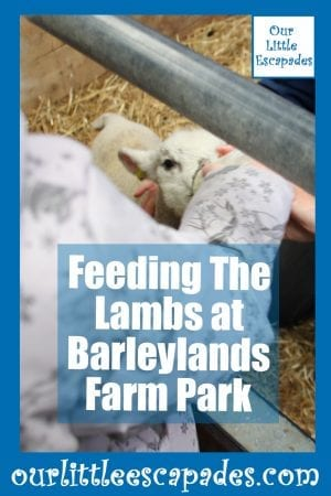 Feeding The Lambs at Barleylands Farm Park