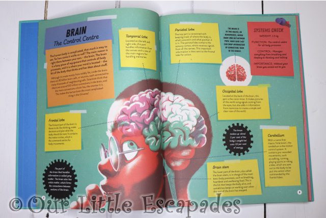 brain so you want to build a human inside pages