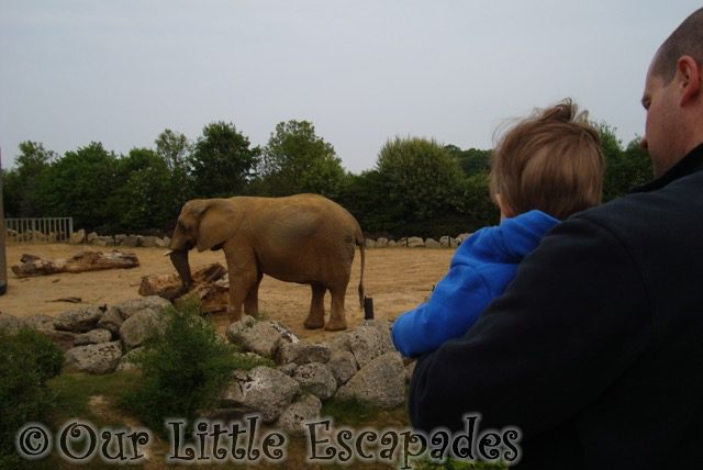 darren ethan elephant colchester zoo first birthday treat
