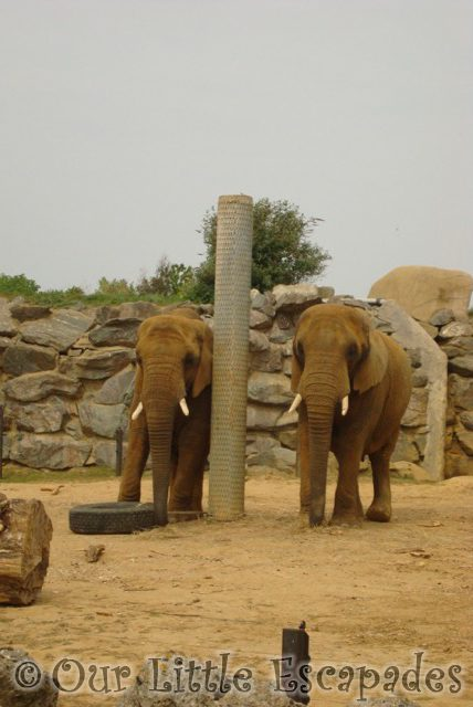 elephants colchester zoo first birthday treat