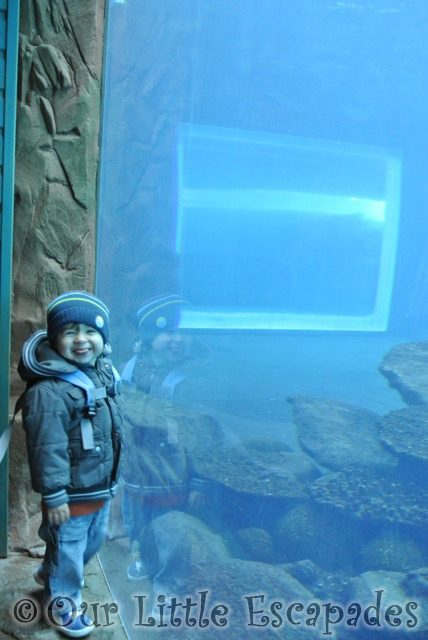 ethan cheeky smile sea lion tank