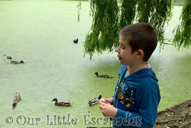 ethan ducks feed the ducks