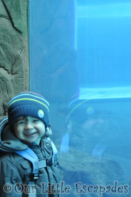 ethan smiling visiting colchester zoo