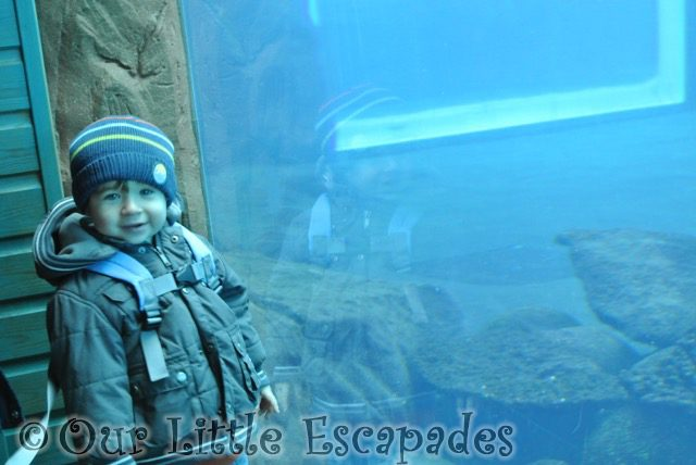 ethan waiting for sealions visiting colchester zoo