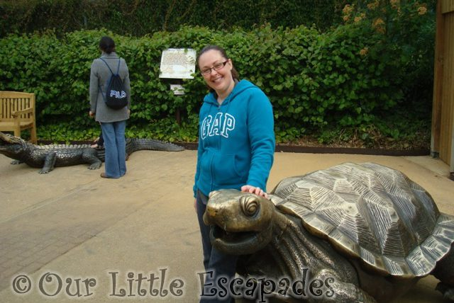 jane copper giant tortoise colchester zoo first birthday treat