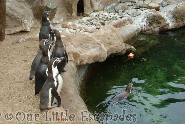 penguins colchester zoo first birthday treat