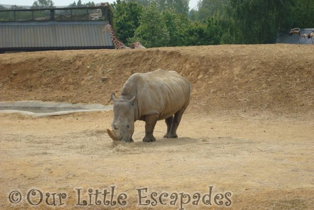 rhinoceros colchester zoo first birthday treat
