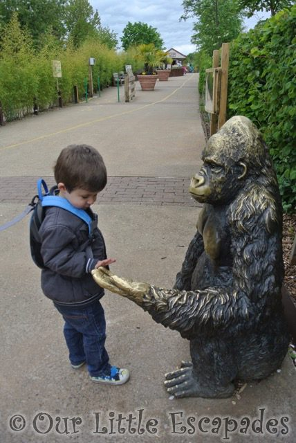 ethan holding bronze gorillas hand ethans first colchester zoo gold pass