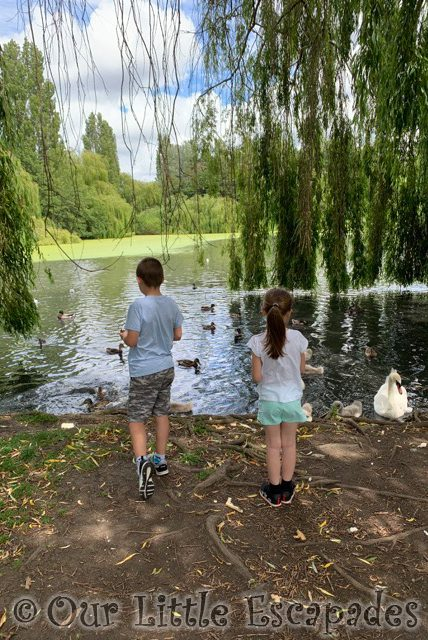 ethan little e feeding ducks swans siblings june 2020