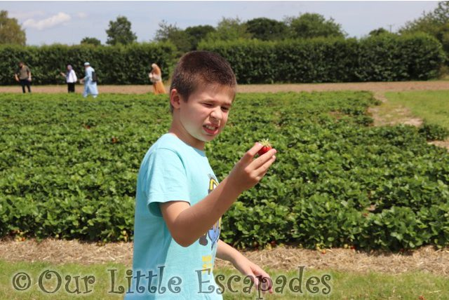 ethan strawberry socially distanced strawberry picking