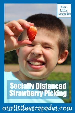socially distanced strawberry picking
