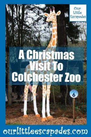 A Christmas Visit To Colchester Zoo