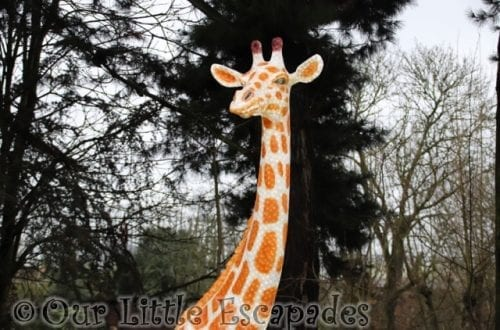 giraffe merry bright trail colchester zoo christmas