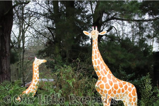 giraffes merry bright trail colchester zoo christmas