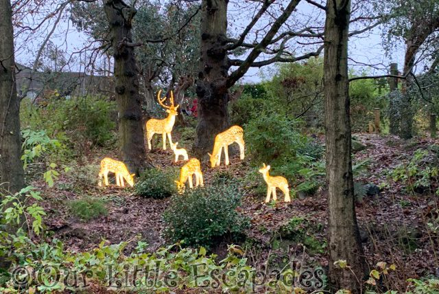 reindeer merry bright trail colchester zoo christmas