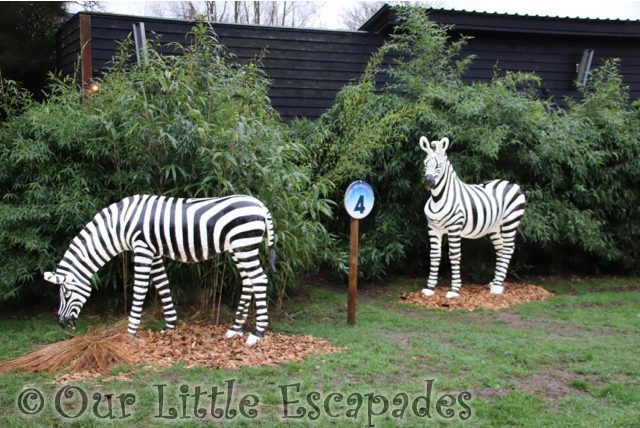 zebras merry bright trail colchester zoo christmas