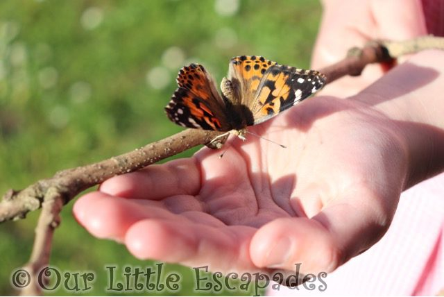 painted lady butterfly little es hand