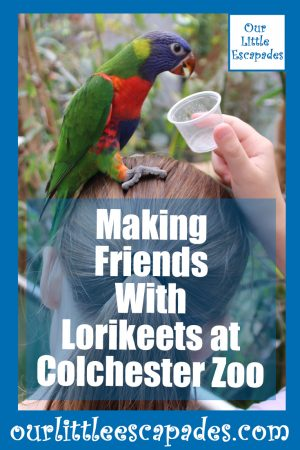 Making Friends With Lorikeets at Colchester Zoo